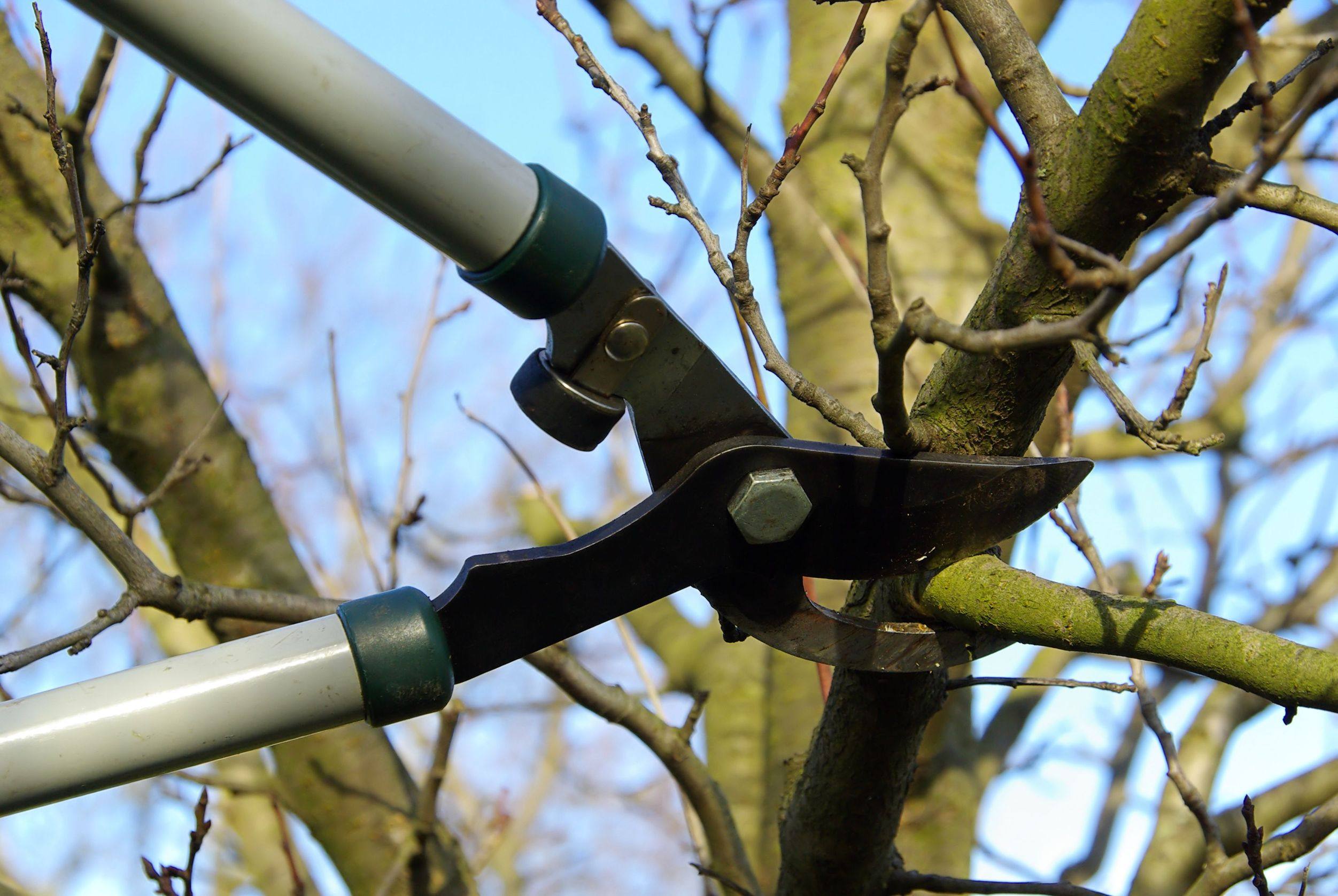 Pruning cuts impact the structure and growth of a tree and, as such, should be executed with thought and care.