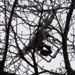 Aerial Drone Stuck in Tree