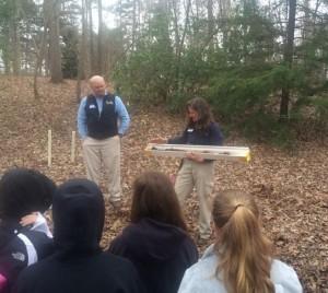 Forest soils