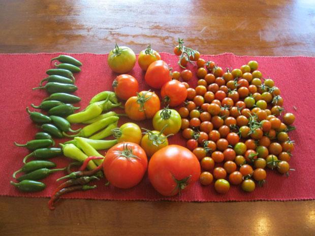 Yesterday's harvest