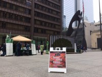 Handing out English oaks at Daley plaza in Chicago in conjunction with the Morton Arboretum.