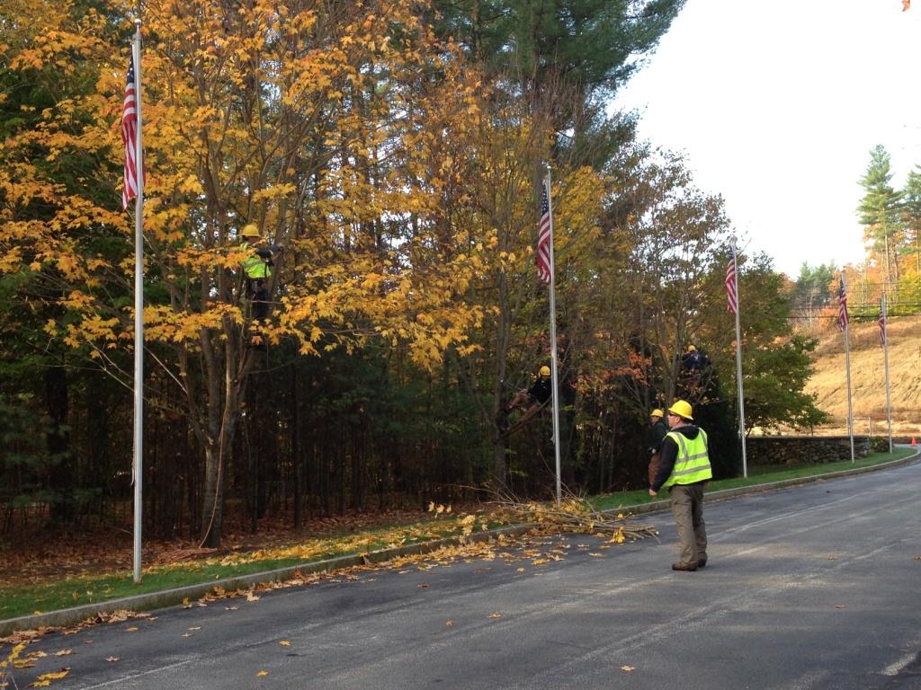 Arborist volunteers pruning