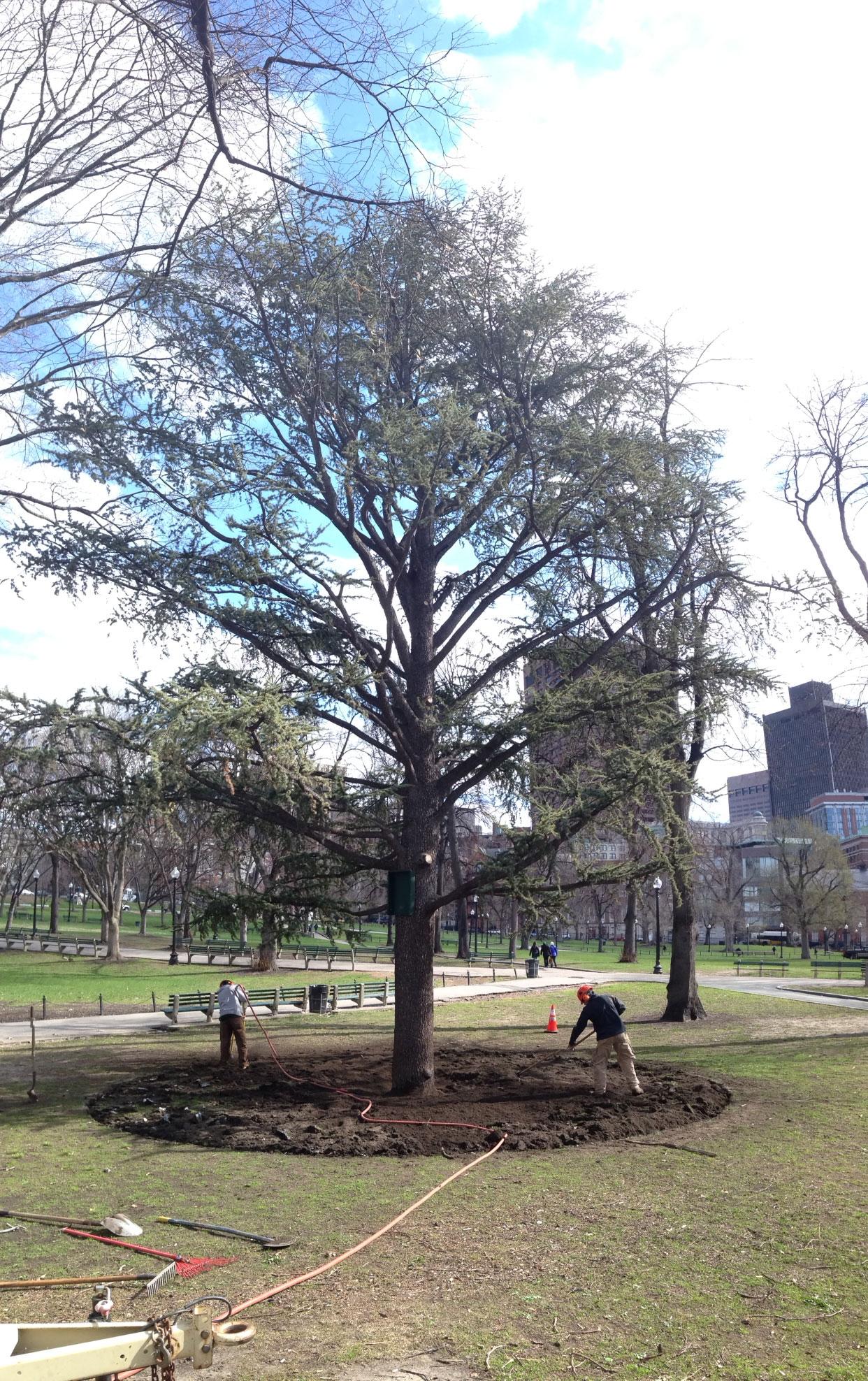 Arbor Day on Boston Common