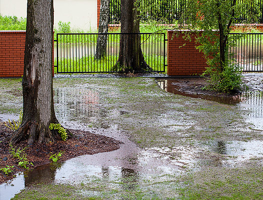 Flooding of root systems can negatively impact trees.
