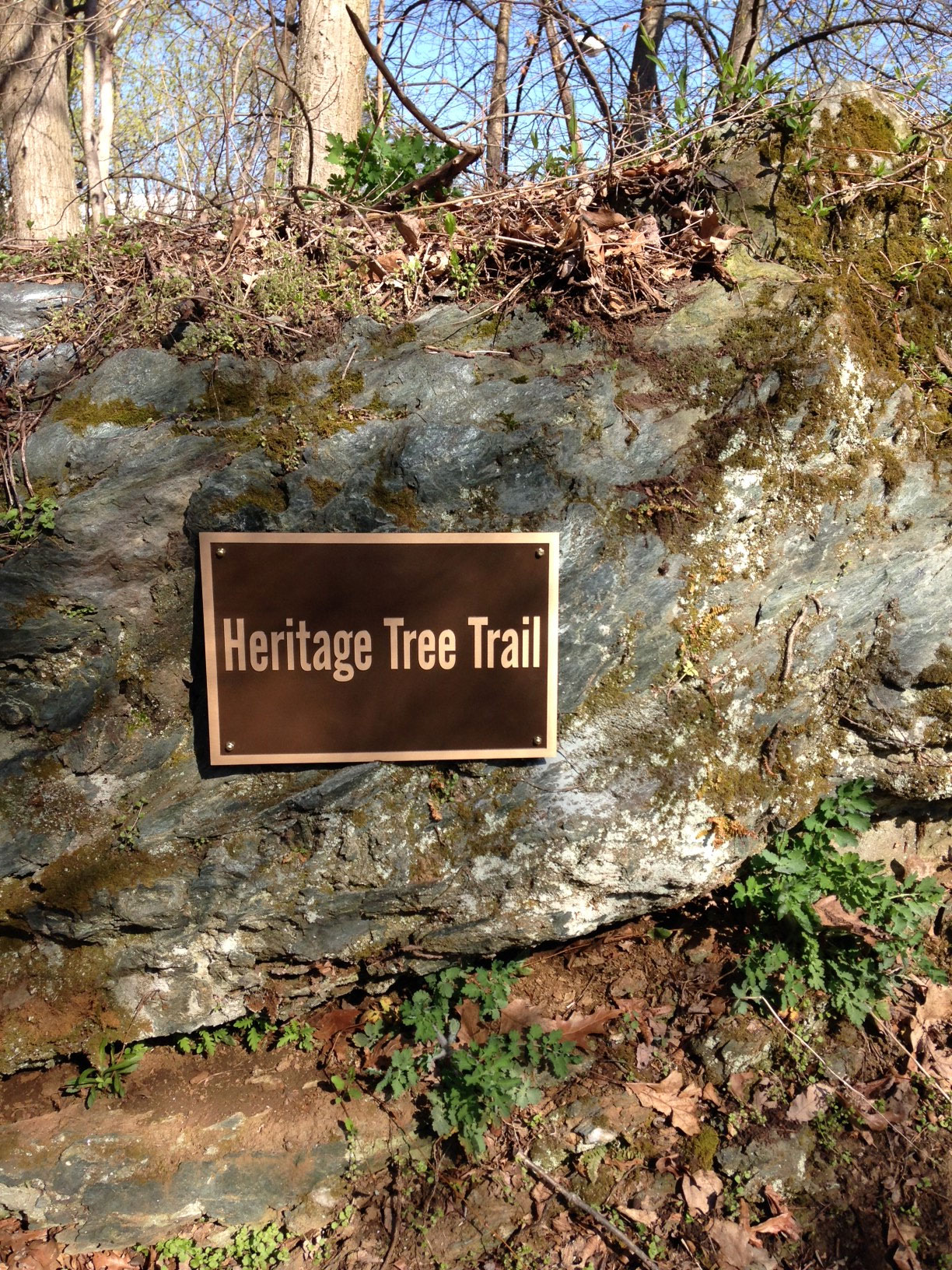Westminster Tree Trail