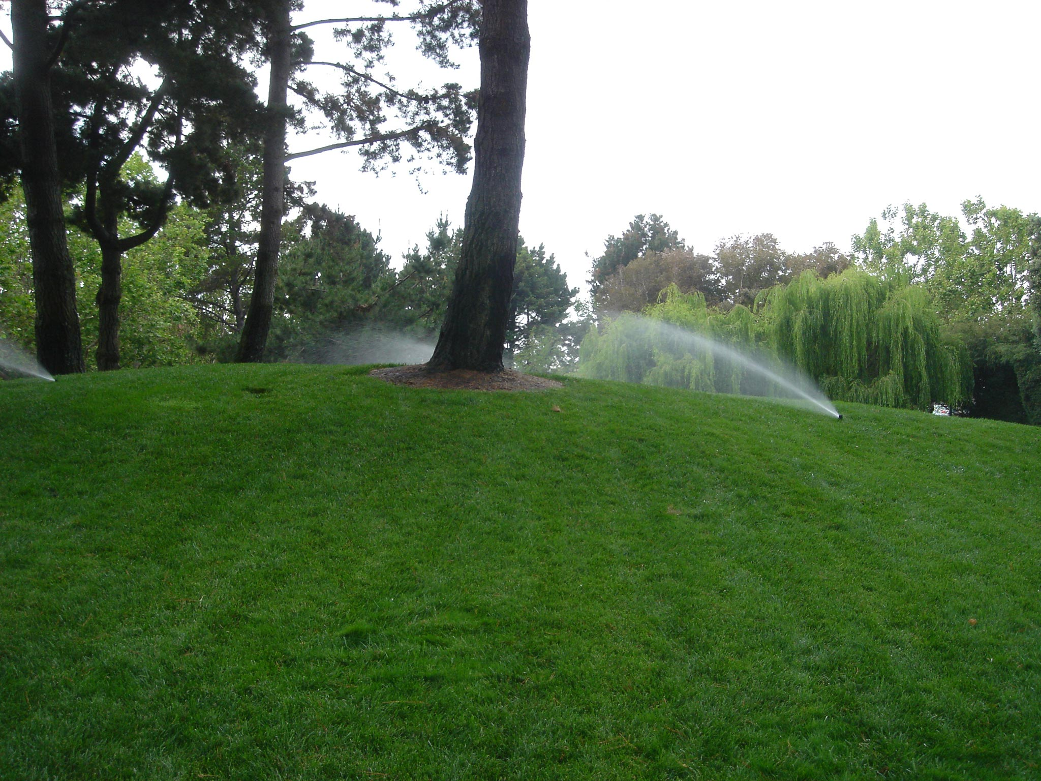 Irrigation should never be directed toward the tree trunk.