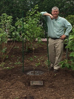 9/11 Survivor Tree Sapling Planted at the Boston Public Gardens