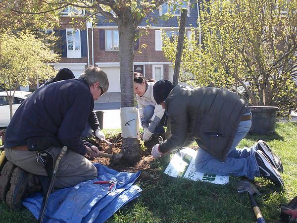 Philadelphia Arbor Day