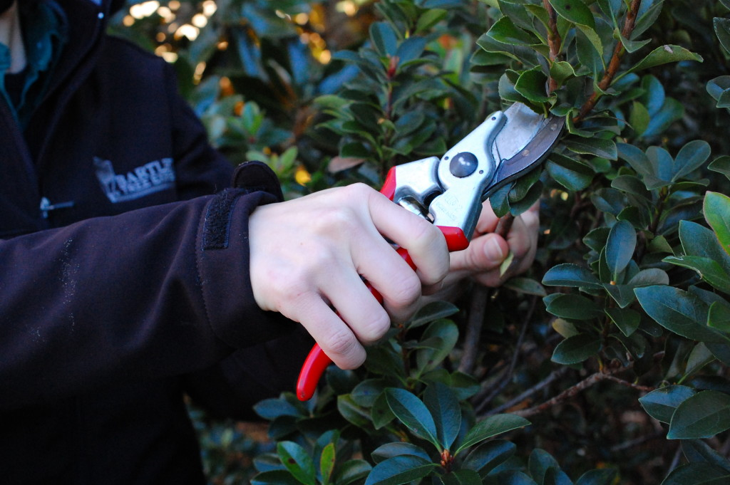 When used as a border, shrubs and hedges need regular pruning to maintain their size and shape.